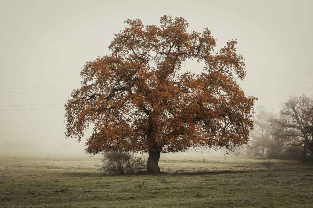 The Celts saw the oak tree as a symbol of truth, bravery and kindness.